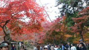 宮島の美しい紅葉